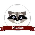 raccoon-nico